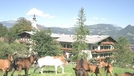 Haflingerhof (Golling)