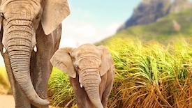 Podwójne safari - RPA