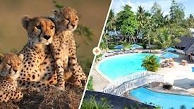 Kenijskie Trio / Travellers Beach Hotel & Club