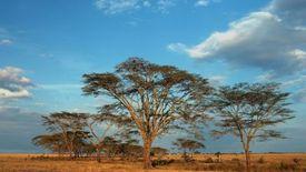 Kenia Tanzania z Zanzibarem