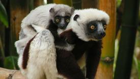 Odkryj Północny Madagaskar