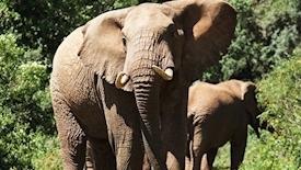 Prywatne safari w Kenii