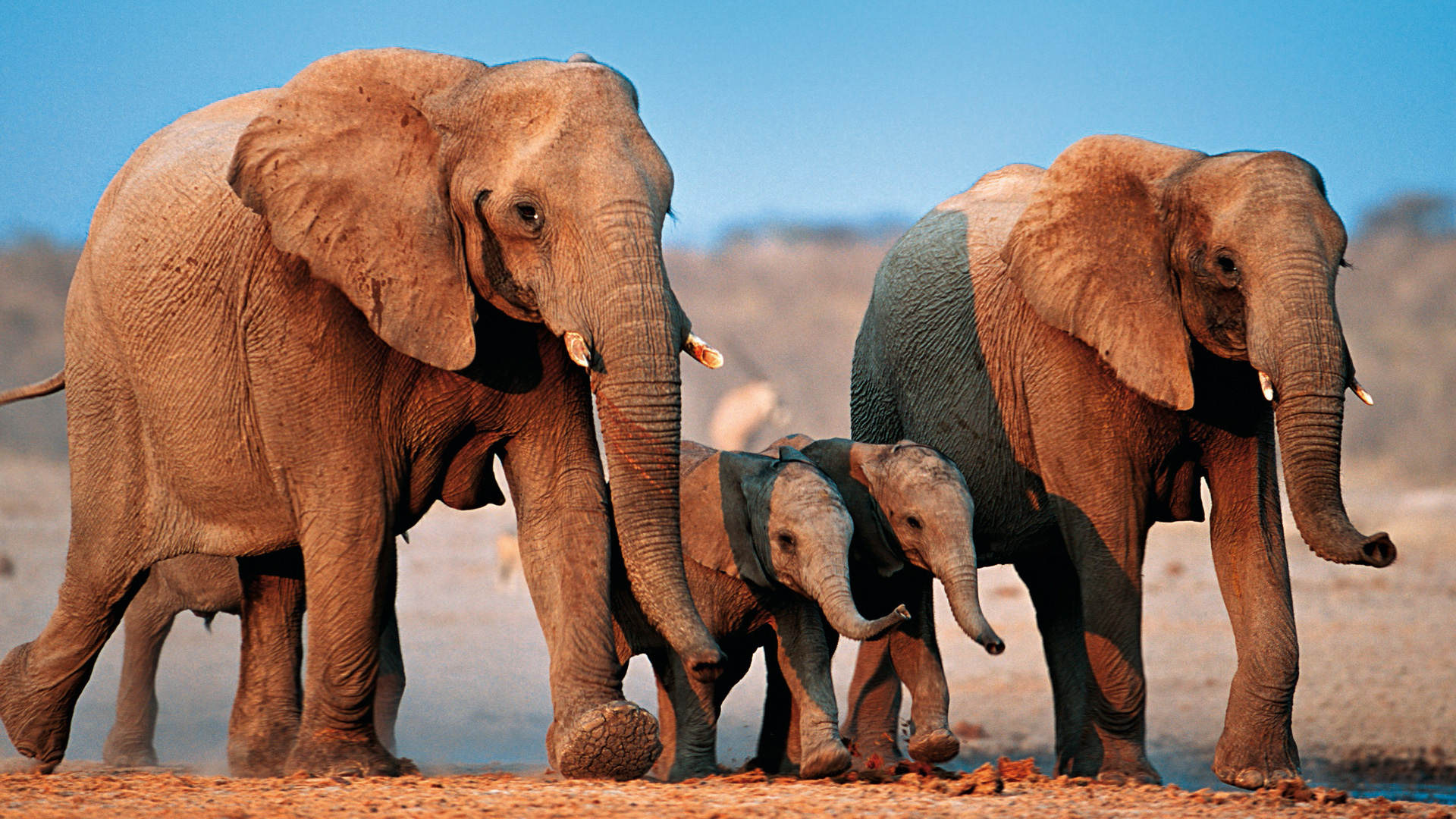 два слоненка картинка поняла про счастье