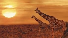 Wielka Piątka Afryki
