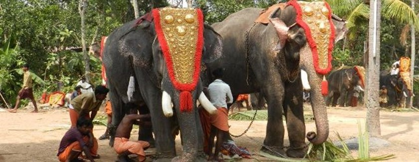 Paripally, Festiwal słoni