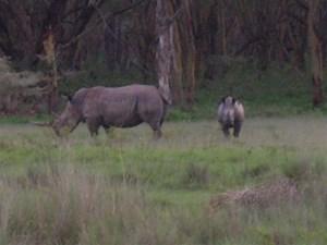 nosorożce-kenia-safari.jpg