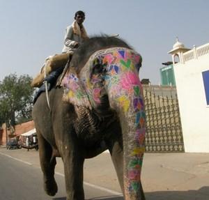 słonie na indyjskich ulicach.JPG