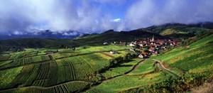 Tutejsze wino dojrzewa na południowych stokach masywu Wogezów. Winnice pokryte są siatką wąskich dróg (asfaltowych i szutrowych) przyjaznych rowerzystom.