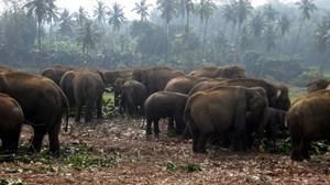 srilanka-7.jpg