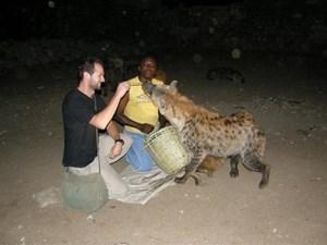 Karmienie hien