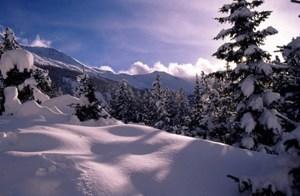Leśne tereny narciarskie