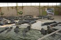 Djerba - na farmie krokodyli
