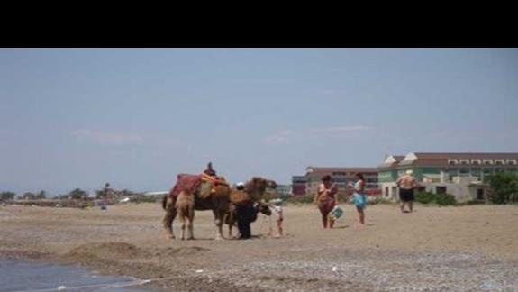 Okret pustyni na plazy w Belek