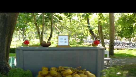 można zakupić kokosy wprost z palmy