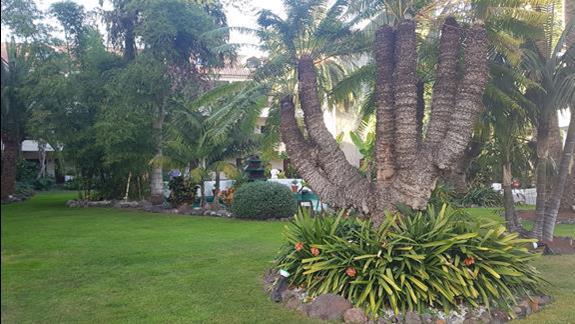 ogrody otaczające hotel