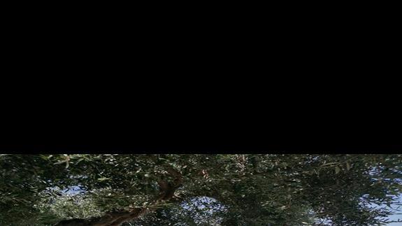Wypoczynek w hotelu pod pieknymi drzewami oliwnymi
