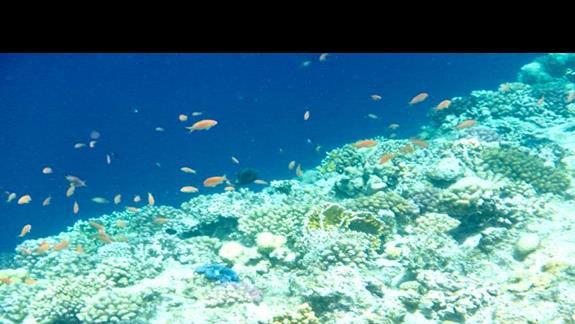 Podwodny świat 1 metr od pomostu
