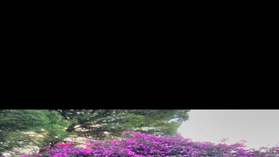 Bardzo klimatyczny osrodek, kameralne biale domki wsród bajkowej zieleni i kwiatów