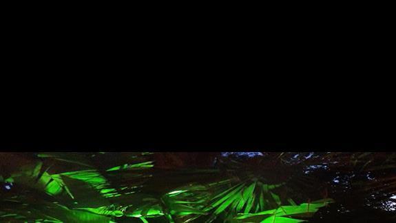 ogród nocą