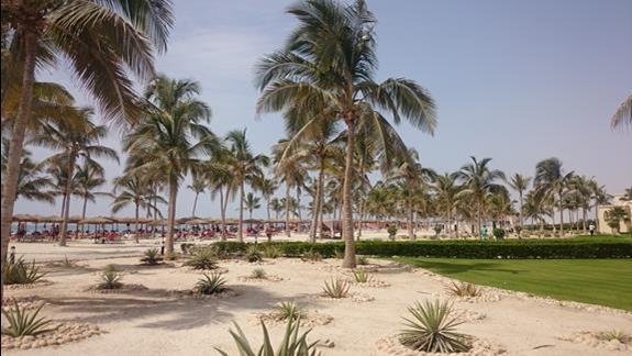 palmy kokosowe na plazy przy hotelu