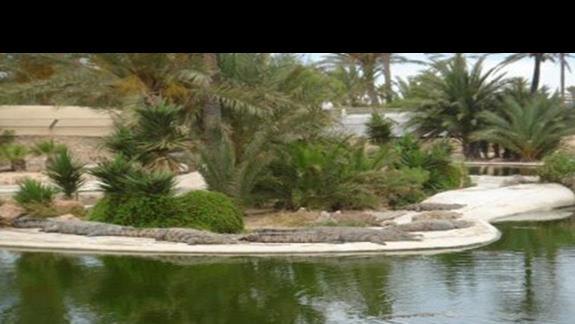 Krokodylki , ok 400 szt :))