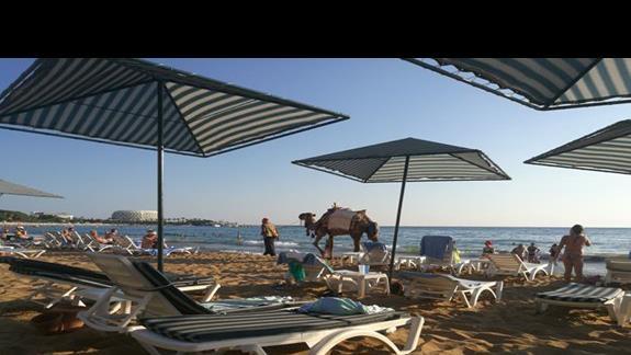 widok z plazy przy hotelu