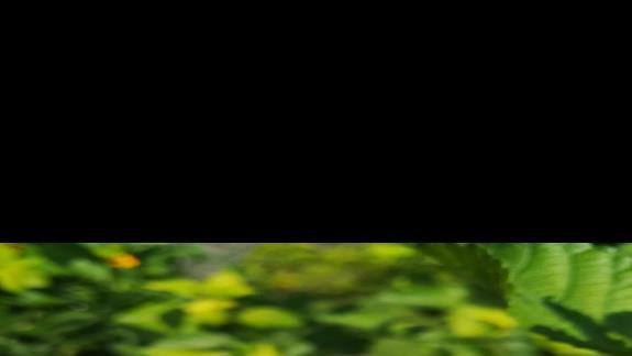 Piekna roslinnosc i duzo kwiatów wokól