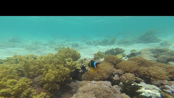 Nemo:)