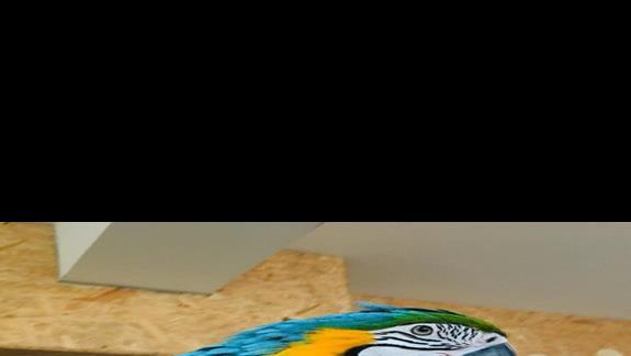Zdjecie z pobliskiej papugarni
