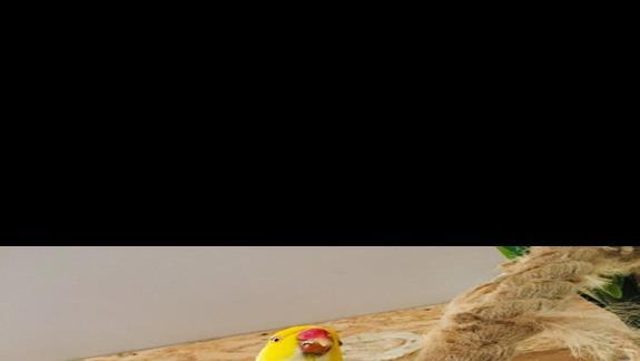 Podopieczna z pobliskiej papugarni
