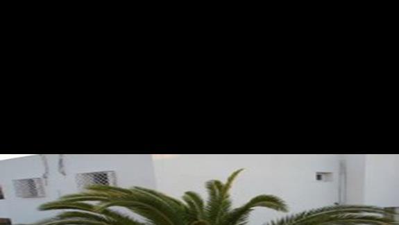 Palma zza okna