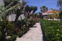 Hotel Kyknos Beach - Ścieżki między bungalowami