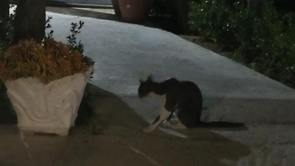 Jeden z wielu kotków na terenie hotelu.
