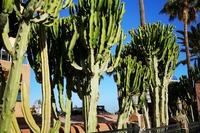 Hotel Bronze Playa - Promenada