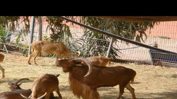 Zoo w poblizu hotelu