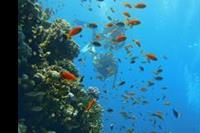 Hotel Otium Amphoras - podwodny swiat jest piekny