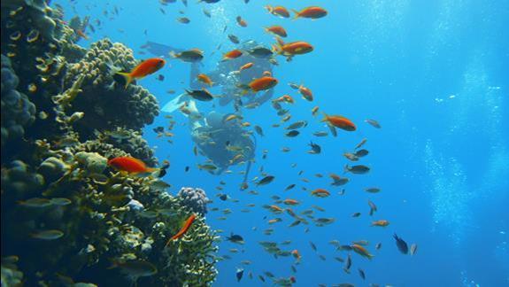 podwodny swiat jest piekny