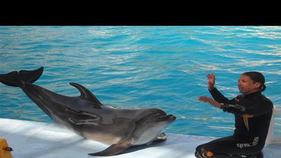 W delfinarium....