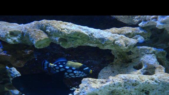 Morskie Akwarium