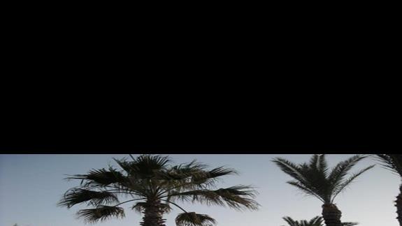 ogród palmowy na tle hotelu