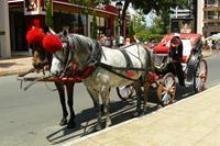 Hotel Globus - bryczki przy hotelu zaprzeżone w konie z charakterystycznymi wielkimi czerwonymi pomponami