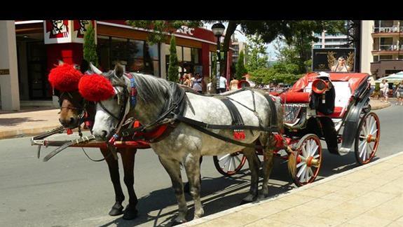 bryczki przy hotelu zaprzeżone w konie z charakterystycznymi wielkimi czerwonymi pomponami