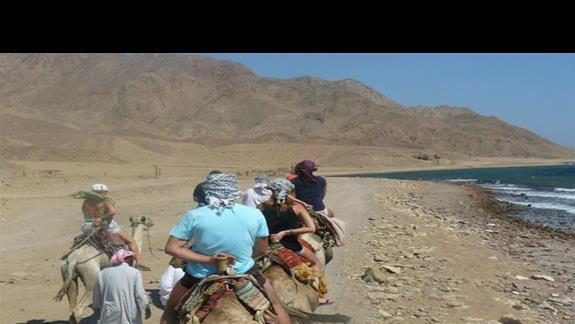 Na wielbladach w Dahabie :)