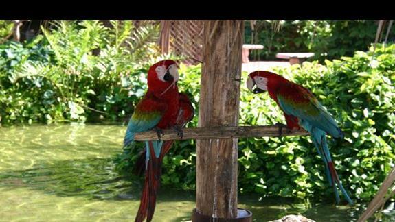 papugi na terenie resortu
