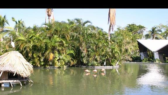 flamingi na terenie resortu