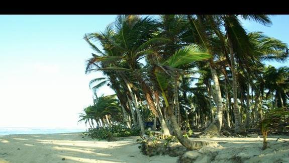 dzikie tereny Punta Cana
