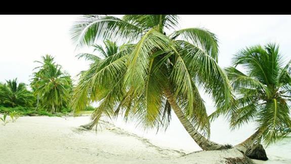 Isla Saona  wycieczka fakultatywna z resortu