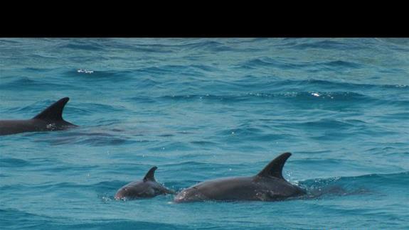 Delfiny spotkane na wycieczce rejsem