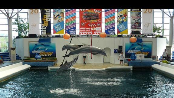 popisy delfinów w delfinarium - Varna