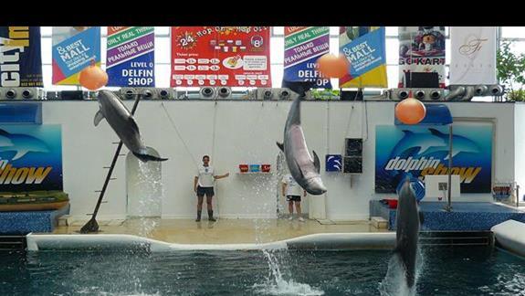 akrobacie delfinów w delfinarium - Varna